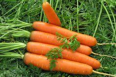 Считается, что морковка очень полезна для зрения.Но в некоторые года она урождается такой мелкой, что, выкапывая урожай, можно это самое зрение серьезно подпортить.  Основной причиной, почему морко…