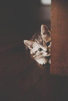 Shy little #cat