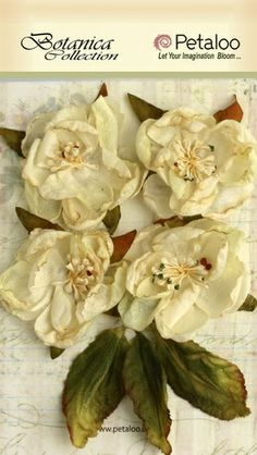 Petaloo - Botanica Collection - Blooms X 4 - All Ivory,$4.99