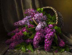 Фотограф Костюченко Людмила (Kostyuchenko Lyudmila) - Корзина сирени. #2055042. 35PHOTO