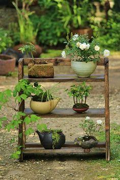 posted©by: █║ Rhèñdý Hösttâ ║█ Bonsai Ficus, Indoor Bonsai, Indoor Garden, Moss Garden, Bonsai Garden, Garden Plants, Moss Plant, Garden Shelves, Japan Garden