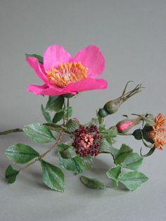 jude miller Wild Rose crepe paper flowers Rosal silvestre hecho de papel  flores