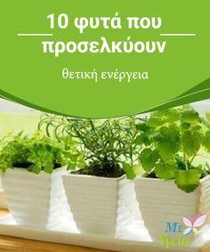 Vegetable Garden, Garden Plants, Outdoor Pots, Outdoor Decor, Floral Flowers, Garden Projects, Trees To Plant, Houseplants, Feng Shui
