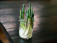 Menos dinheiro, mais verdura: 15 alimentos que você pode replantar