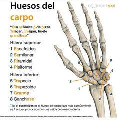 004 unlabelled skeleton Anatomy Menselijk lichaam, Het