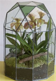 This terrarium has a very striking container, with panels of coloured glass.