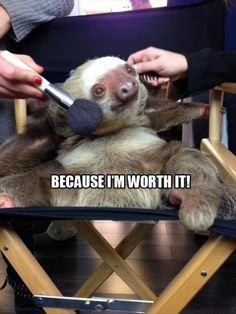 Sloths are awesome