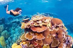 6-Day Best of Cairns Including the Great Barrier Reef, Kuranda and the Daintree Rainforest This amazing great value tour package covers all the must do's while visiting the beautiful Cairns region. Included is five nights' accommodation in a standard queen, twin or triple room, round-trip airport transfers Cairns Harbour lunch cruise with transfers, a full-day tour to the Great Barrier Reef with an introductory dive, a day-trip to Kuranda aboard the Scenic Railway and Skyrail ...