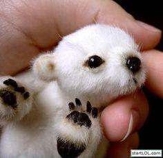 polarbaby