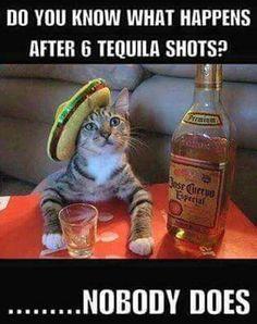 Tequila cat always cracks me up #tequila #meme #funny #haha #humor