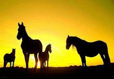 paarden in avondschemering