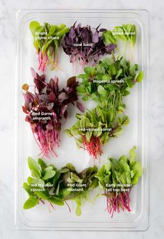 A primer on the many microgreen varieties you can grow.