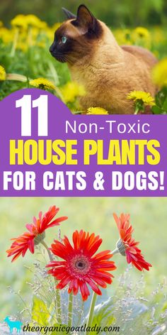 Plants Safe For Cats and Dogs! Non Toxic Plants For Cats and Dogs, Non Toxic Plants For Pets, Houseplants for Pets, Gardening Tips Houseplants Safe For Cats, Toxic Plants For Cats, Cat Safe Plants, Cat Plants, Inside Plants, Cat Friendly Plants, Layout Design, Best Indoor Plants, Pet Safe