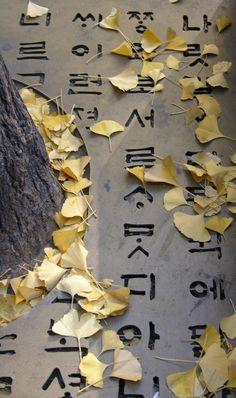 은행잎 ginkgo leaves <3