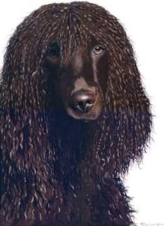 """Flurry"", stunning pet portrait, by artist Keran Sunaski Gilmore"