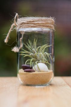 This is our new collection of beautiful Air Plants in glass jars.  We up-cycle glass jars into beautiful Garden Jars. They are all unique as it only