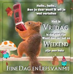 Happy Friday, Good Morning, Qoutes, Happy Birthday, Motivation, Animals, Good Friday, Good Night Gif, Funny