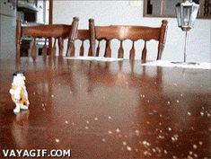 animated! Pájaro beserker! Fuente: Vayagif.com, cortesía del usuario vivaboca78, pero al parecer ha borrado su cuenta así que perdió los derechos de autor UAJAJAJAJA :D
