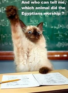 Which animal did the ancient Egyptians worship?