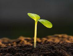 Crescere e emergere in un mercato concorrenziale
