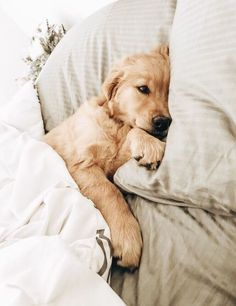 The many things I respect about the Trustworthy Golden Retriever Puppy Cute Dogs And Puppies, Baby Dogs, Doggies, Free Puppies, Cutest Dogs, Adorable Puppies, Pet Dogs, Cute Little Animals, Cute Funny Animals
