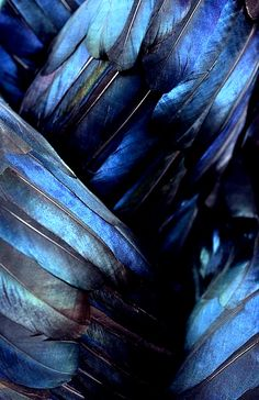 gorgeous feathers