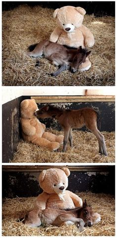 That most be the most adorable thing I've ever seen