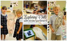 Exploring Owls With Kindergarteners