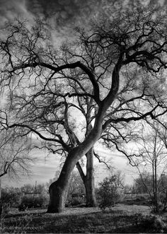 Winter trees. #potd #outlander @Outlander_Starz pic.twitter.com/ryUMWTB7Uk