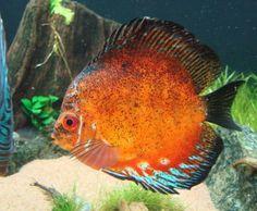 Fuentes de Información - Los peces más bonitos y coloridos