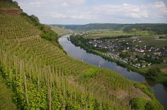 One of my favorite wine regions, and exquisitely beautiful. Wine And Spirits, Wine Making, Countryside, Vineyard, Castle, Germany, Around The Worlds, River, Summer Food