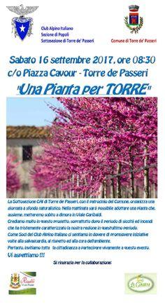 Torre de Passeri in arrivo nuovi alberi in Viale Garibaldi