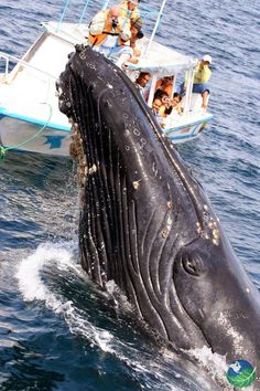 Costa Rica is incredible! Awesome country  This photo says everything!  Costa Rica es increible! Esta foto lo dije todo! http://info.mycostaricalink.com/osa-peninsula #whales #costarica. vma.