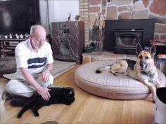 How to teach your dog to get along in a multi-species household - Whole Dog Journal Article