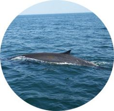 Odyssey Whale Watch  Also offered are;   Deep sea fishing trips,  Bird watching tours &  Private Charters.    http://odysseywhalewatch.com/