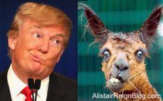 Donald Trump and I Lama Crazy. alistairreignblog.com