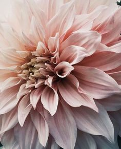 She listens to the name 'Cafe au lait'. Iphone Background Wallpaper, Flower Wallpaper, Nature Wallpaper, Art Floral, Pink Flowers, Beautiful Flowers, Foto Poster, Flower Aesthetic, Aesthetic Wallpapers