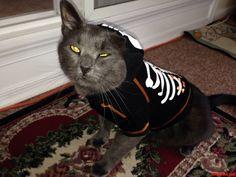 I Dont Think He Likes It. - http://cutecatshq.com/cats/i-dont-think-he-likes-it/