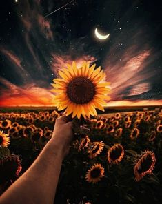 Sunflower wallpaper by - - Free on ZEDGE™ Tumblr Wallpaper, Cute Wallpaper Backgrounds, Pretty Wallpapers, Galaxy Wallpaper, Aesthetic Iphone Wallpaper, Nature Wallpaper, Aesthetic Wallpapers, Landscape Wallpaper, Sunflower Photography