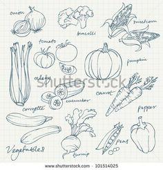 Set of Vegetables doodles vector
