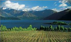 New Zealand is well known as a wine-producing country – the problem is it's recognized almost exclusively for Sauvignon Blanc. The electric gooseberry style of Sauvignon Blanc popularized in the Marlborough region of New Zealand has been a boon to the country's wine culture, but has overshadowed the grand wines produced from other varieties.... http://www.snooth.com/articles/new-zealand-pinot-noir-445/