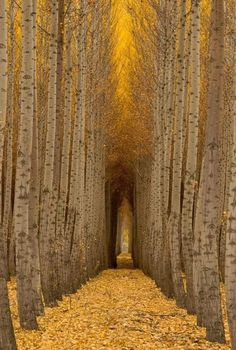ImageFind images and videos about autumn, fall and tree on We Heart It - the app to get lost in what you love. Forest Path, Tree Forest, Tree Tree, Landscape Photography, Nature Photography, Travel Photography, Digital Photography, Boardman Tree Farm, Joie De Vivre