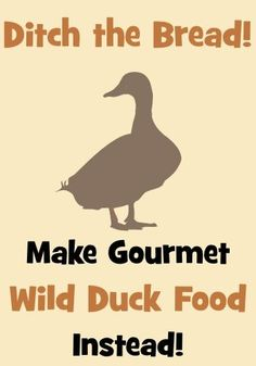 Ditch the Bread and Make Gourmet Wild Duck Food Instead!   Wildlife Fun 4 Kids by karla