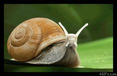 Snailjet kalkışa hazır