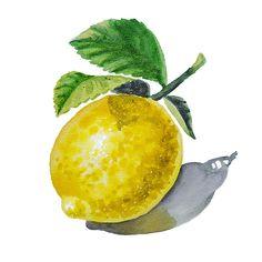ArtZ Vitamins The Lemon' by Irina Sztukowski - http://irina-sztukowski.artistwebsites.com/featured/artz-vitamins-the-lemon-irina-sztukowski.html