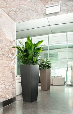 modern tall indoor plants - Google Search