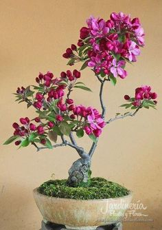 Bello Bonsai!! - http://jardineriaplantasyflores.com/fotos/bello-bonsai/