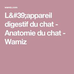L'appareil digestif du chat - Anatomie du chat - Wamiz