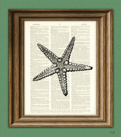 Hey, I found this really awesome Etsy listing at http://www.etsy.com/listing/58464584/starfish-illustration-beautifully