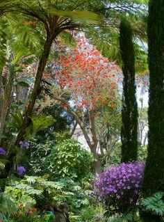 Giardini la Mortella - on Forio, the volcanic island of Ischia